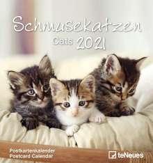Schmusekatzen 2021. Postkartenkalender, Kalender
