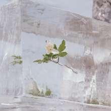 Efterklang: Windflowers, CD