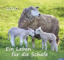 Ein Leben für die Schafe 2012, Diverse